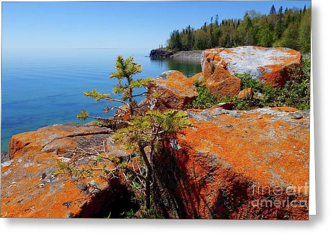 Lichens On The Shoreline Greeting Card by Sandra Updyke