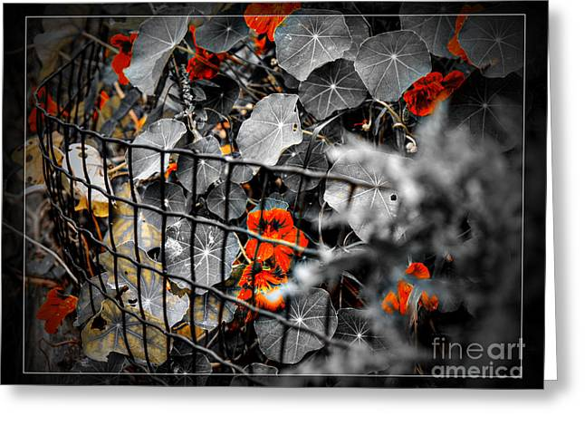 Life Behind The Wire Greeting Card
