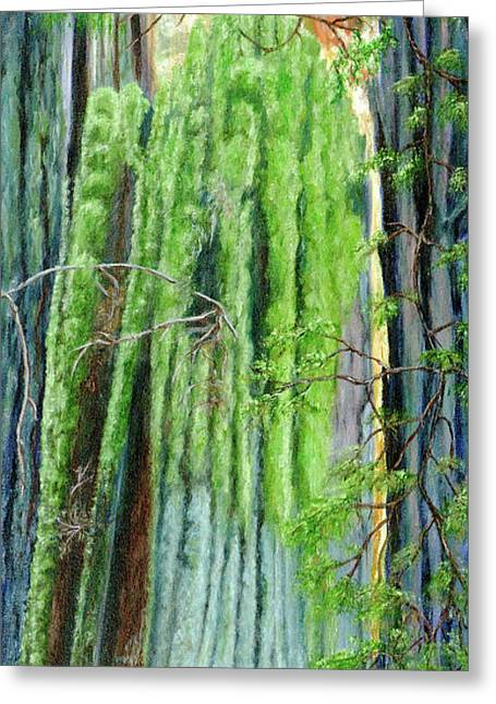 Life In A Redwood Forest Greeting Card