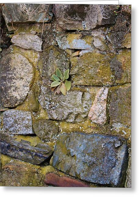 Life In The Wall Greeting Card
