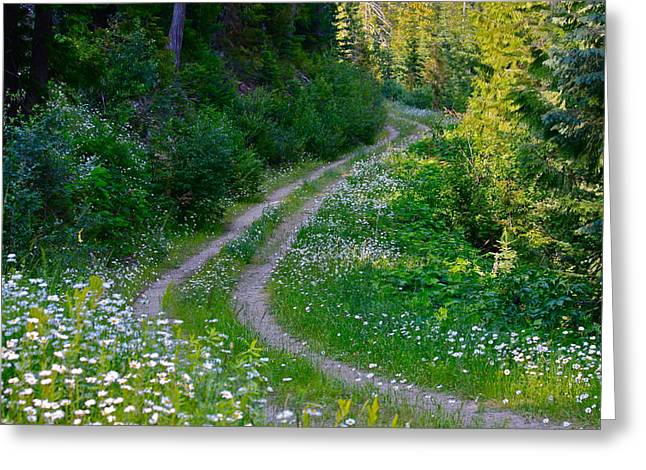 Life Is A Journey On A Road Lined With Daisies Greeting Card