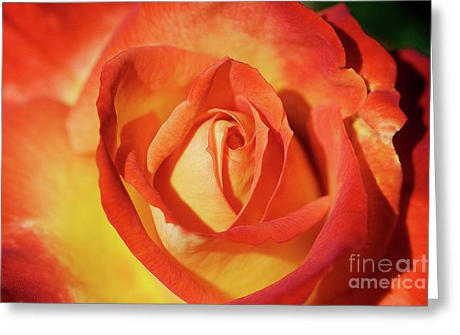 Life Is Like A Rose Peeping Through The Hardships Of Life To Bloom With Color Greeting Card by Fir Mamat