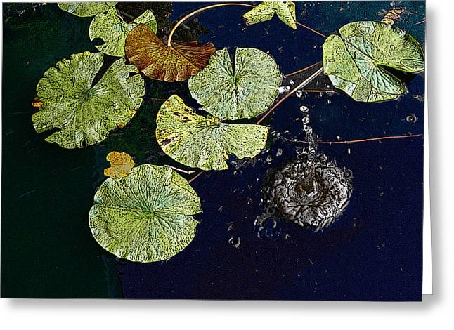 Life Of A Lily Pad 3 Greeting Card by Nicholas J Mast