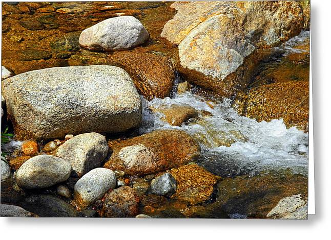 Life Of The Riverbed Greeting Card by Lynda Lehmann