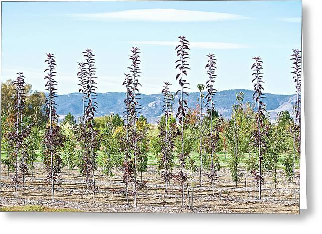 Life On A Tree Farm-foothills View #1 Greeting Card