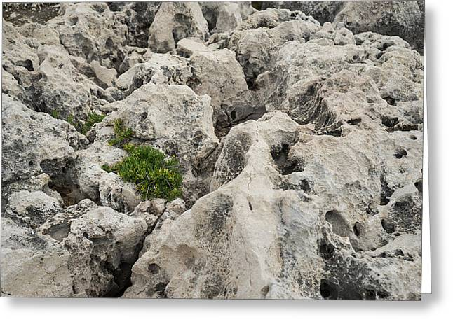 Life On Bare Rock - Weathered Limestone And Little Green Survivors Greeting Card by Georgia Mizuleva