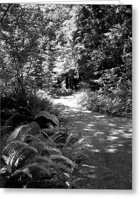 Life Twist And Tures  Bw Greeting Card by Ken Day