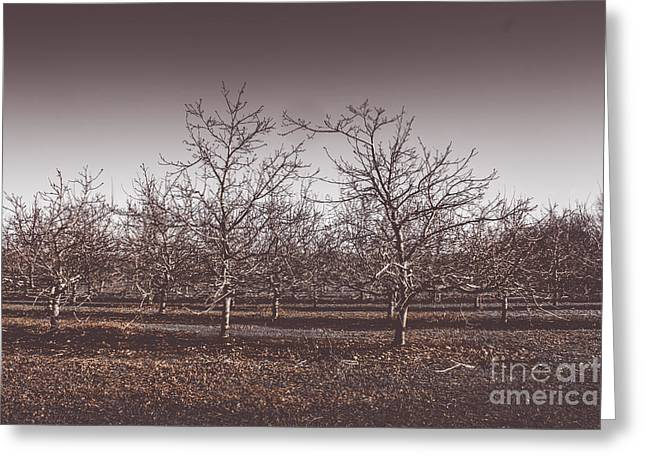 Lifeless Cold Winter Orchard Trees Greeting Card by Jorgo Photography - Wall Art Gallery
