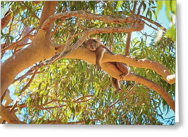 Life's Hard, Yanchep National Park Greeting Card