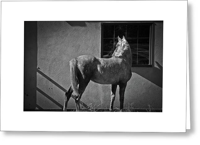 Greeting Card featuring the photograph Light And Shadow by Catherine Sobredo