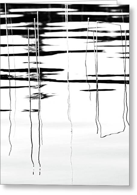 Light And Shadow Reeds Abstract Greeting Card