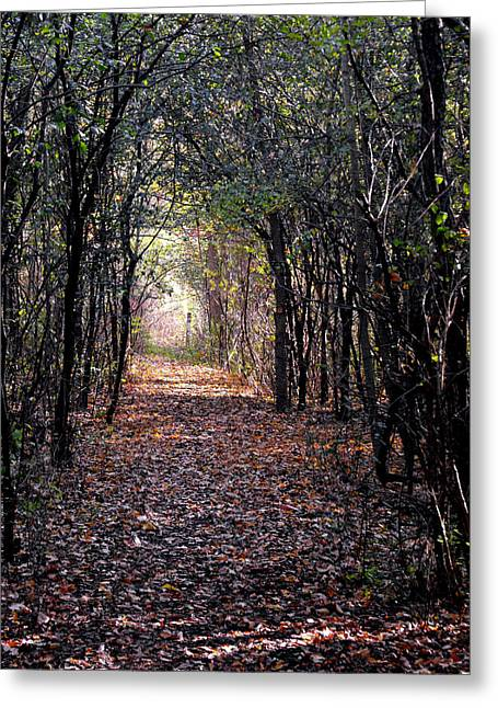 Eva Thomas Greeting Cards - Light at the end of the path Greeting Card by Eva Thomas