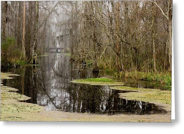Light Fog On The Swamp Greeting Card