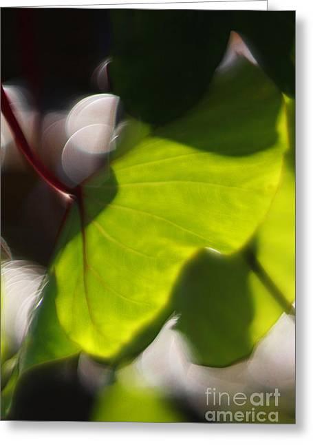 Light I Greeting Card by Katherine Morgan