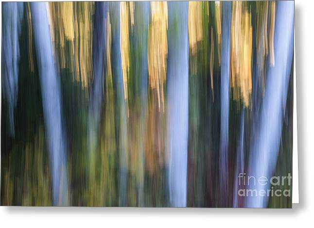 Light In Evening Forest Greeting Card by Elena Elisseeva
