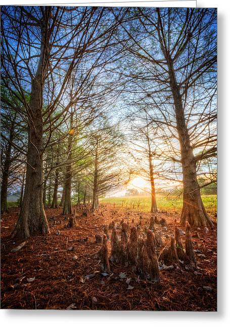Light In The Cypress Trees II Greeting Card by Debra and Dave Vanderlaan