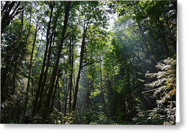 Greeting Card featuring the photograph Light In The Forest by SimplyCMB
