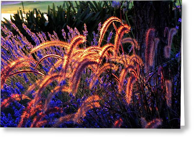 Light Is Good Greeting Card by DEBRON Art