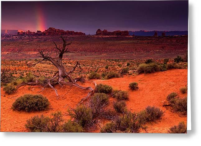 Light Of The Desert Greeting Card