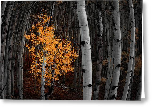 Light Of The Forest Greeting Card by Darren White