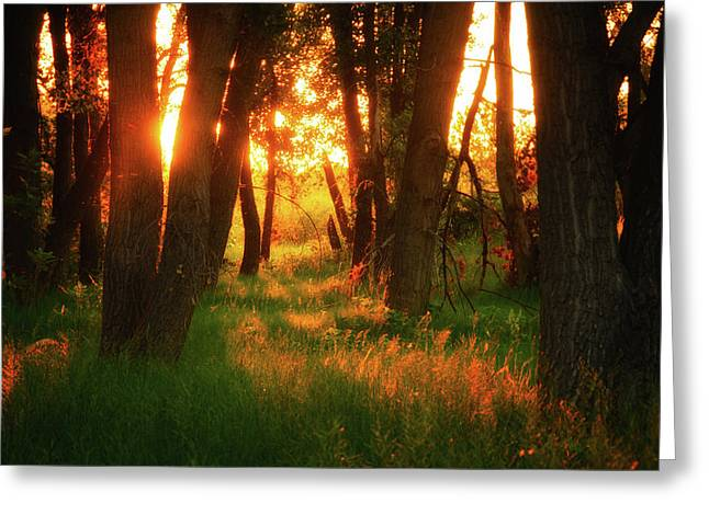 Greeting Card featuring the photograph Light Of The Forest II by John De Bord