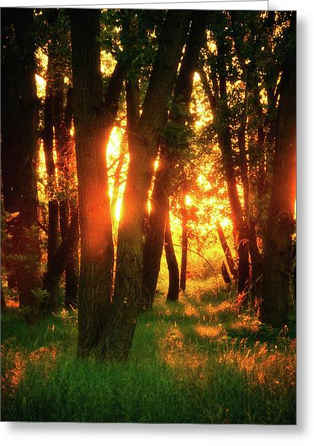 Greeting Card featuring the photograph Light Of The Forest by John De Bord