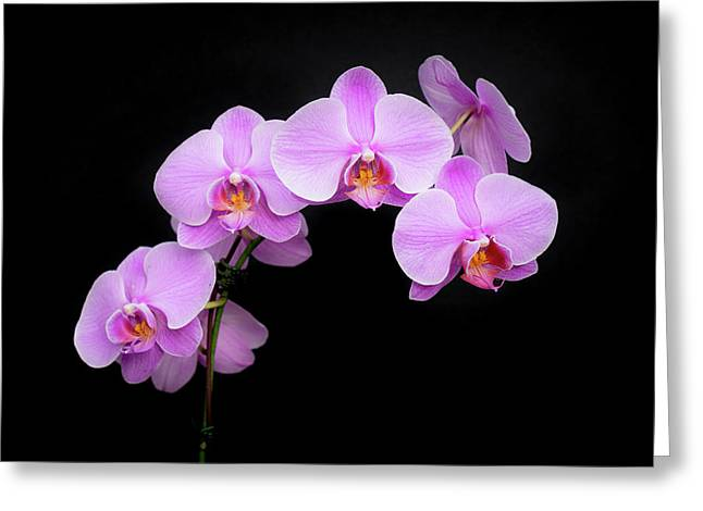 Light On The Purple Please Greeting Card