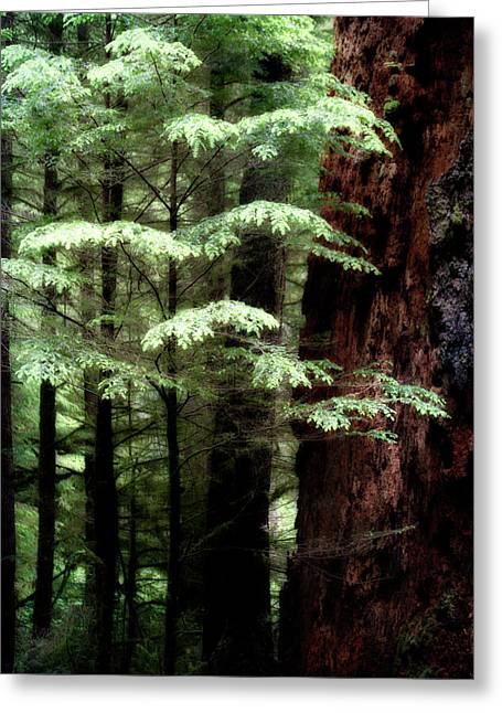 Light On Trees Greeting Card
