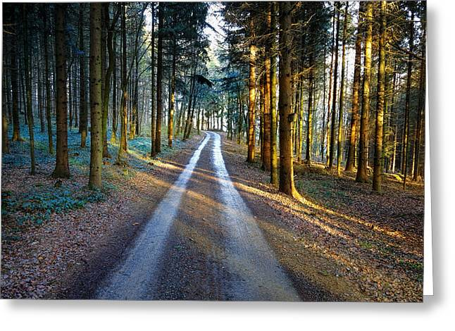 Light Path Crossing In The Woods Greeting Card