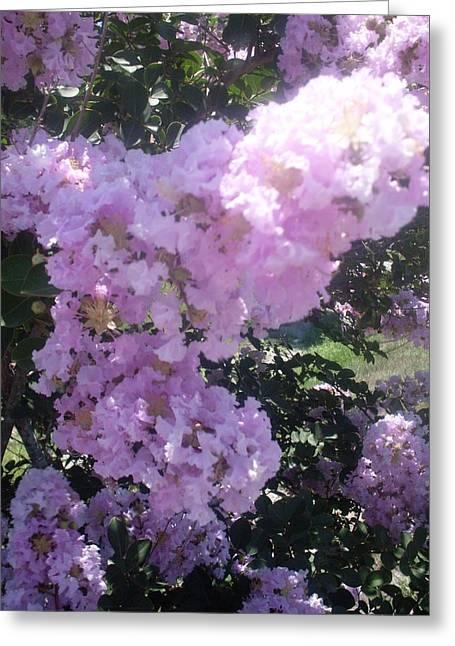 Light Purple Crape Myrtle Flowers Greeting Card by Warren Thompson