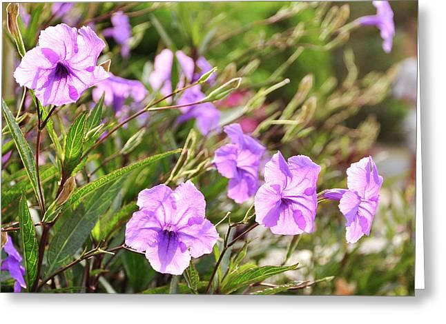 Light Purple. Greeting Card by Nhi Ho Thi Xuan