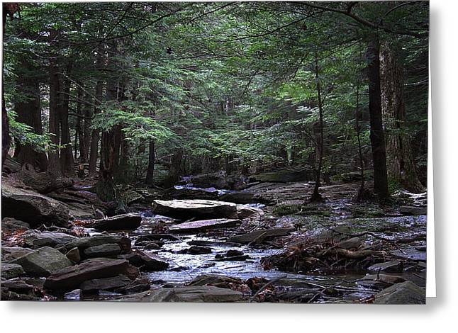 Light Shimmering Through The Hemlock Canopy Of The Kaaterskill Greeting Card by Terrance DePietro