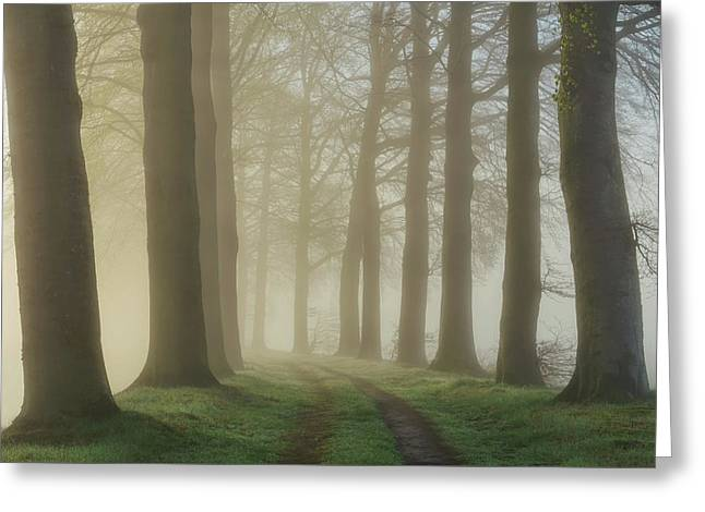 Lights Shine Bright Greeting Card by Martin Podt