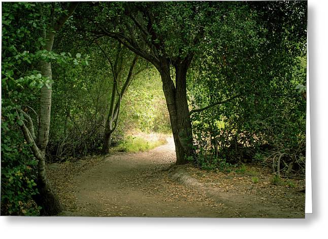 Light Through The Tree Tunnel Greeting Card
