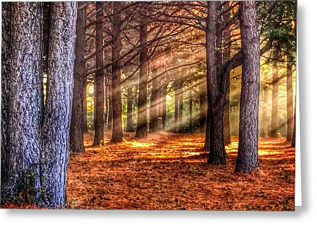 Light Thru The Trees Greeting Card by Sumoflam Photography