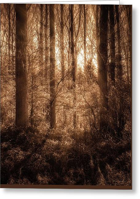 Light Trough The Forest Greeting Card