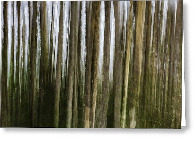 Light Within The Forest II Greeting Card by Scott Leslie