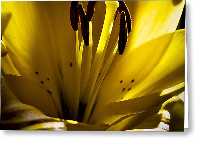 Lighted Lily Greeting Card by David Patterson