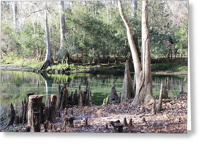 Lighted Springs Greeting Card by Michelle Barone