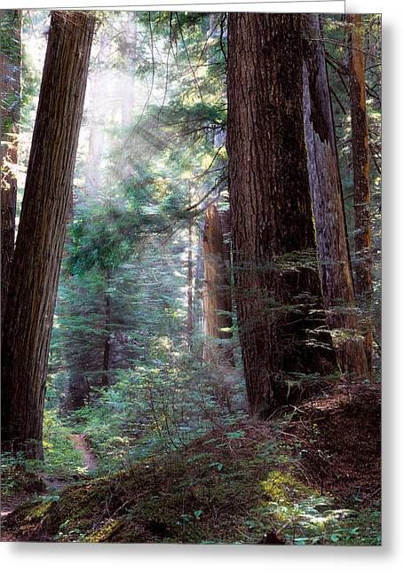 Lighting The Path Greeting Card by Leland D Howard