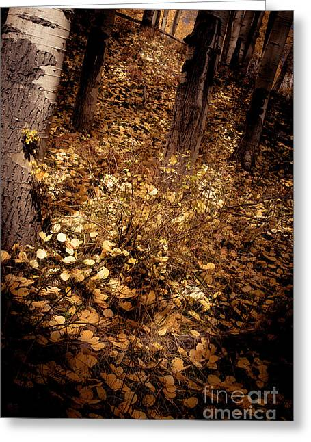 Greeting Card featuring the photograph Lighting The Way by The Forests Edge Photography - Diane Sandoval