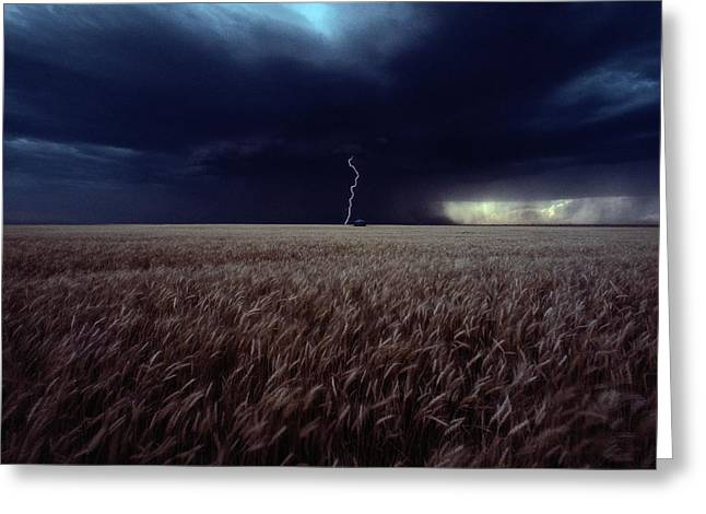 Lightning Flashes Above A Kansas Wheat Greeting Card by Cotton Coulson
