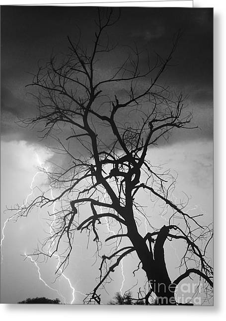 Lightning Tree Silhouette Portrait Bw Greeting Card