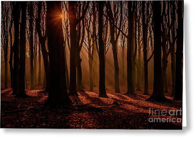 Lights And Shadows Greeting Card