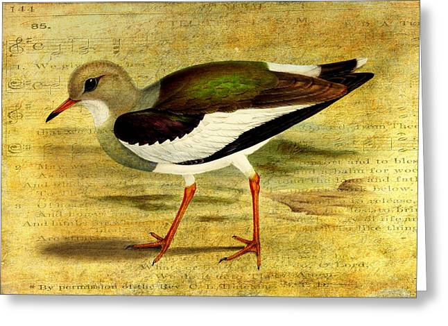 Like A Lapwing Greeting Card by Sarah Vernon