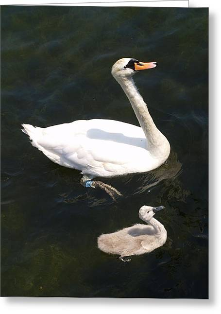 Greeting Card featuring the photograph Like Father Like Son by Michael Canning
