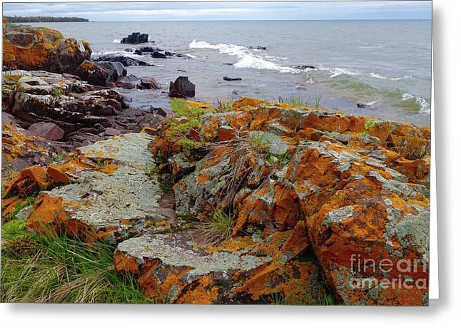 Liking The Lichens Greeting Card by Sandra Updyke