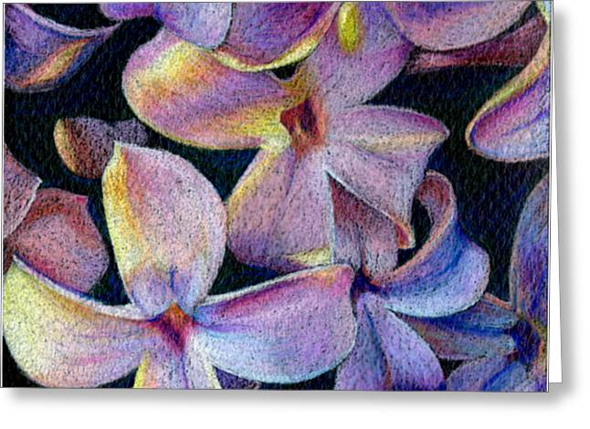 Lilac 1 Greeting Card by Audi Swope