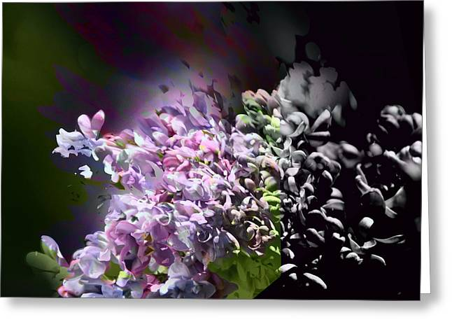 Lilac 2 Greeting Card