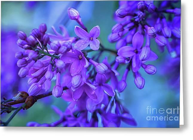 Lilac Blues Greeting Card